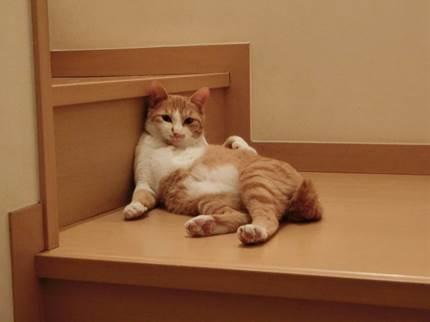 階段でリラックスするネコ