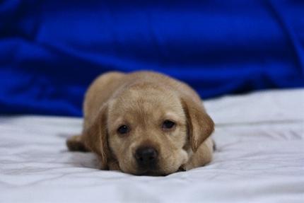 夏バテで寝る犬