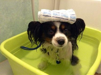 犬の夏バテ予防法