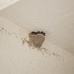 知ってて損無し!ツバメの巣作りにまつわる縁起のいい話!