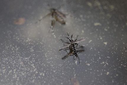 うっとうしい蚊