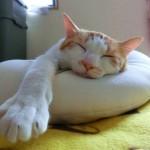 枕が肩こりの一番の原因か!?健康枕は健康じゃない!?
