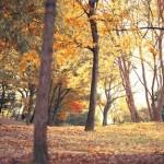 秋の落ち葉に毎年こまる!米ぬかを使って堆肥を作ろう!