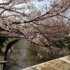 実際に行くと素晴らしかった花見の名所!関東のおすすめ3選!