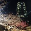 東京ならでは!コントラストが素晴らしい六本木ヒルズの桜坂