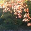 紅葉を楽しむなら登山が人気!関東なら八甲田山周辺がおすすめスポット
